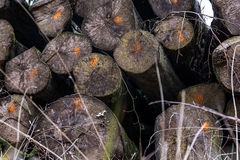 Transporte marcado desbastado Forest Deforestation da indústria dos logs foto de stock