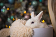 Transporte retro do brinquedo branco do coelho sob a árvore decorada imagem de stock