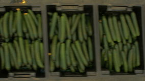 Transporter with Boxes of Cucumbers are Moving On Production stock video footage