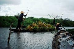 Transportering av ris efter skörden på en liten kanal arkivbilder