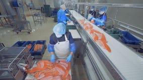 Transporteringsmekanismen förflyttar stycken av fisken för att bearbeta Fiskfabrik lager videofilmer