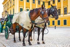 Transportes do cavalo no quadrado principal do palácio de Schonbrunn em Viena imagem de stock