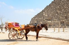 Transportes puxados a cavalo em Giza imagem de stock royalty free
