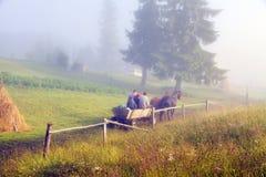 Transportes puxados por cavalos na névoa Imagens de Stock Royalty Free