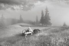 Transportes puxados por cavalos na névoa Imagens de Stock