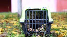 Transporteur avec un chat banque de vidéos