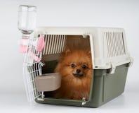 Transporteur d'animal familier avec le chien à l'intérieur images stock