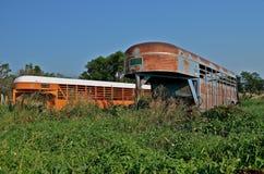 Transporteurs de bétail dans la longue herbe Photos stock