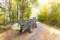 Transporting the firewoods. Transporting the firewoods, horse cart Royalty Free Stock Image
