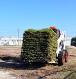 Transporting Fresh Sod Grass. A bobcat tractor transporting a load of fresh squares of sod grass royalty free stock images