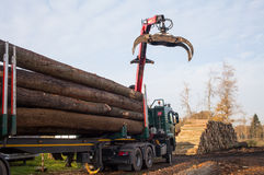 Transporting from tree trunks with a truck Stock Photos