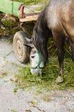 Transportu koń Zdjęcie Stock