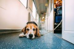 Transportu pies W Kolejowym frachcie Zdjęcia Stock