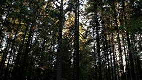 Transportwagen geschossen vom Wald stock video footage