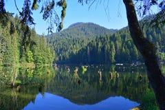 Transsylvania jeziorna góra i nieżywi drzewa Fotografia Royalty Free