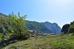 Transsylvanian θάμνος σε έναν λόφο στοκ φωτογραφίες με δικαίωμα ελεύθερης χρήσης