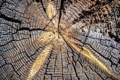 Transversale textuur van houten logboeken Stock Fotografie