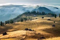 transylvania Dom na wsi rozpraszali wśród wzgórzy pasa trawy krów i Obraz Royalty Free