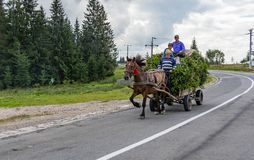 A Horse Pulling a Cart royalty free stock images