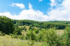 Transylvanian sommarlandskap, härliga lösa blommor, intakt natur, royaltyfri foto
