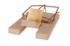 Trap. Loaded mouse trap with cheese chunk stock images