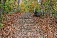Trap aan het bos Stock Foto's