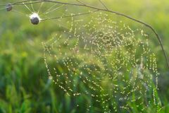 Trap cobweb Royalty Free Stock Photos
