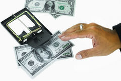 Trap with dollar bills isolated over white background, Risk in business, Businessman taking money from a mousetrap.  Royalty Free Stock Images