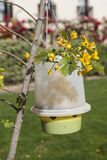 Trap for flies and malarial mosquitoes. on a tree in Africa Stock Photography