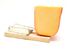 Trap mice and cheese. 