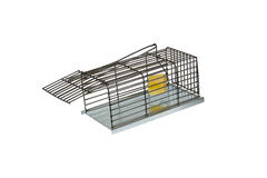 Trap for rats Royalty Free Stock Photos