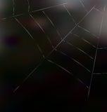 Trap spider web on dark background Royalty Free Stock Photo