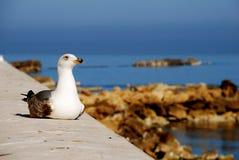 Trapani - gaivota Foto de Stock Royalty Free
