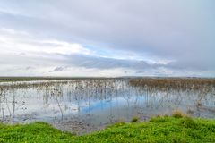Trapani and Paceco nature reserve in Trapani, Italy Royalty Free Stock Photography