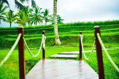 Trapbrug aan het hemelse gebied van het rijstterras stock fotografie