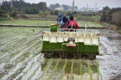 Trapiantatrice del riso immagini stock libere da diritti