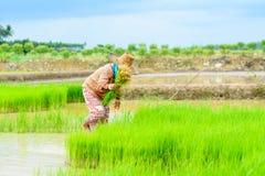 Trapianto dell'agricoltore Fotografia Stock