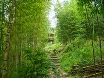 Trappa i en grön bambuskog arkivbild