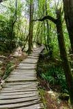 Trappa i nationalparkPlitvice sjöarna royaltyfria foton