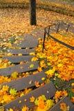 Trappa i parkera i stupade guld- sidor Royaltyfria Foton