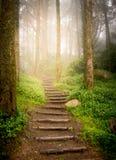Trappa i skog arkivfoto