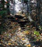 Trappa i skogen arkivfoton