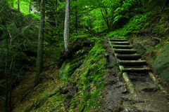 Trappa i skogen arkivfoto