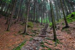 Trappa i skogen royaltyfri bild