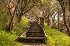 Trappa i skogen, Nya Zeeland Arkivbild