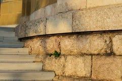 Trappa och stenväggar Arkivfoto
