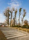 Trappa och träd Fotografering för Bildbyråer