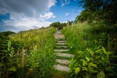 Trappa på en slinga i den Shenandoah nationalparken, Virginia Royaltyfri Bild