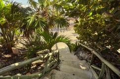 Trappa som omges av tropisk vegetation royaltyfri foto