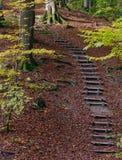 trappa till Arkivfoton